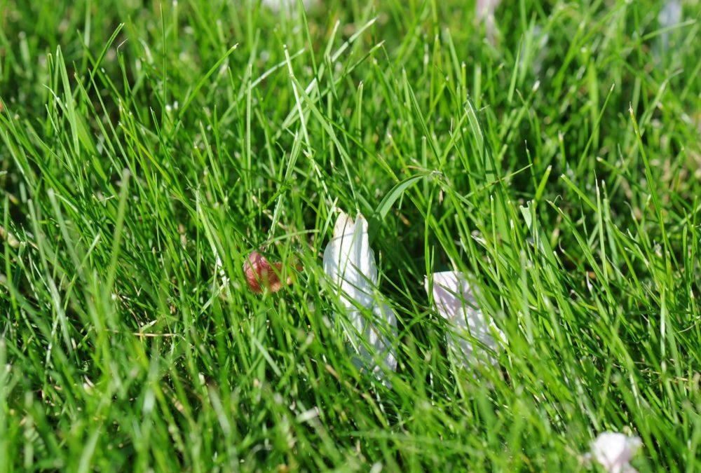 Gødning til græsplænen