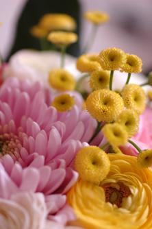 Levende bordpynt med planter
