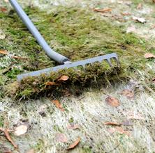 Sneskimmel og ukrudt i græsplænen