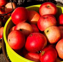 Æbletid – agurketid
