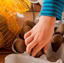 Forspiring af kartofler