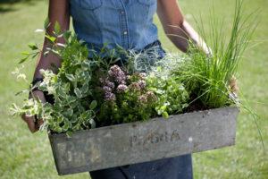 Juni – Bio krydderurter