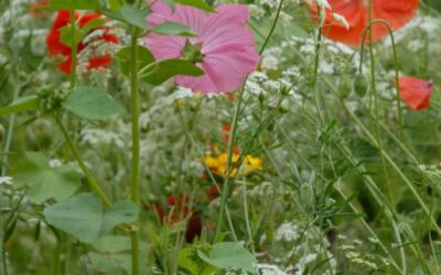 Maj – Vilde blomster